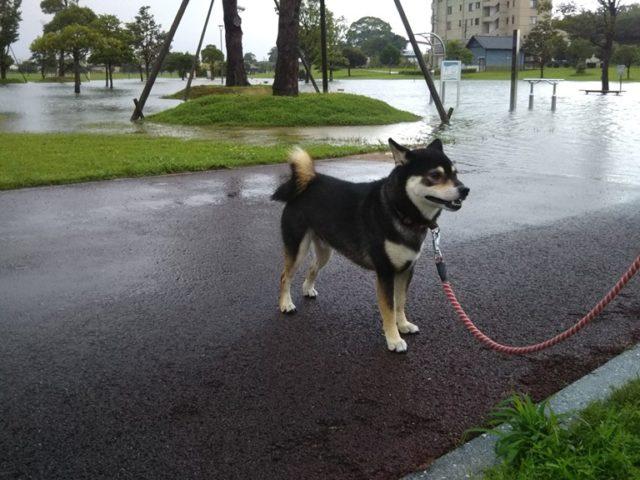 筑後広域公園が大雨で通路が池状態