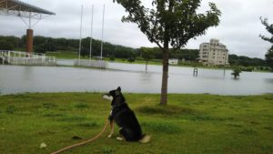 筑後広域公園のグランドも水没