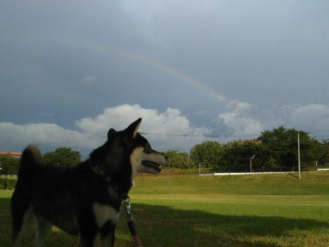 筑後広域公園で見た虹