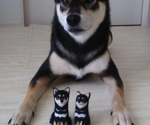 黒柴犬ぽんすけファミリー