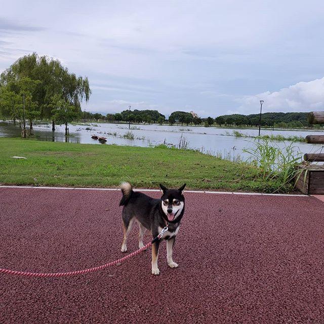 筑後広域公園は大雨の影響で散歩コースが…