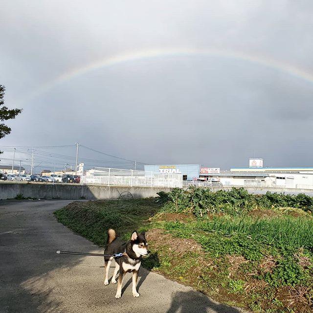 虹がかかってました曇ったり晴れたり変な天気でした